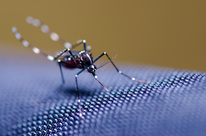 Cómo convertir tu casa en un espacio libre de mosquitos | El Mundo Today