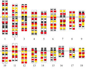 Traducen El Genoma Humano Al Catalán El Mundo Today
