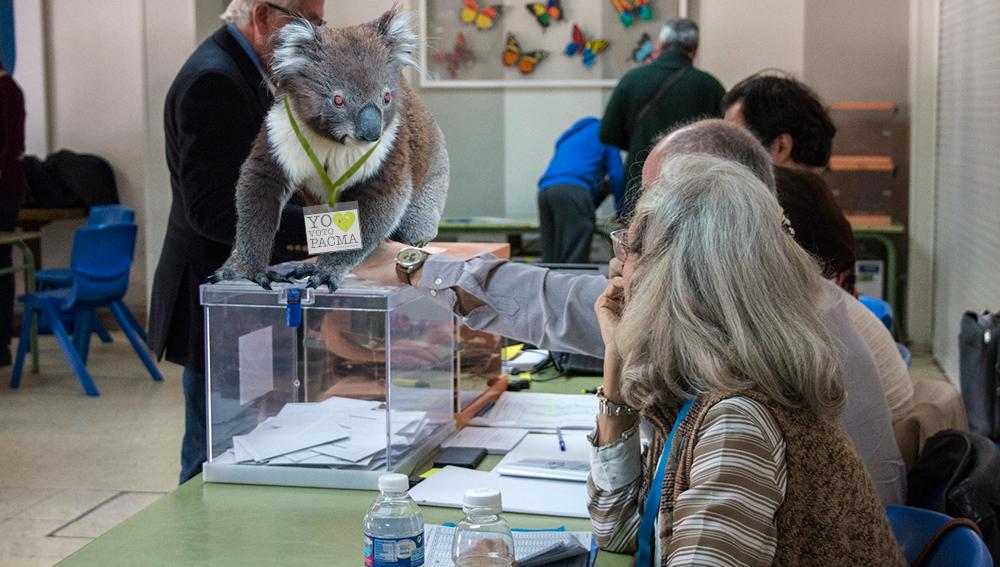 El koala que lidera PACMA ataca a una vocal de mesa